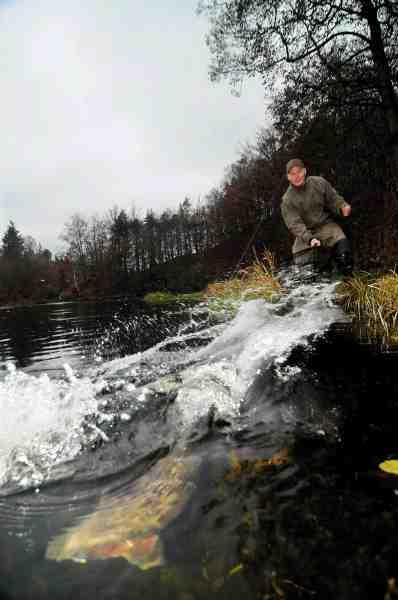 Denne fisk fra Trollemölle P&T i Sydsverige, nægter at overgive sig.