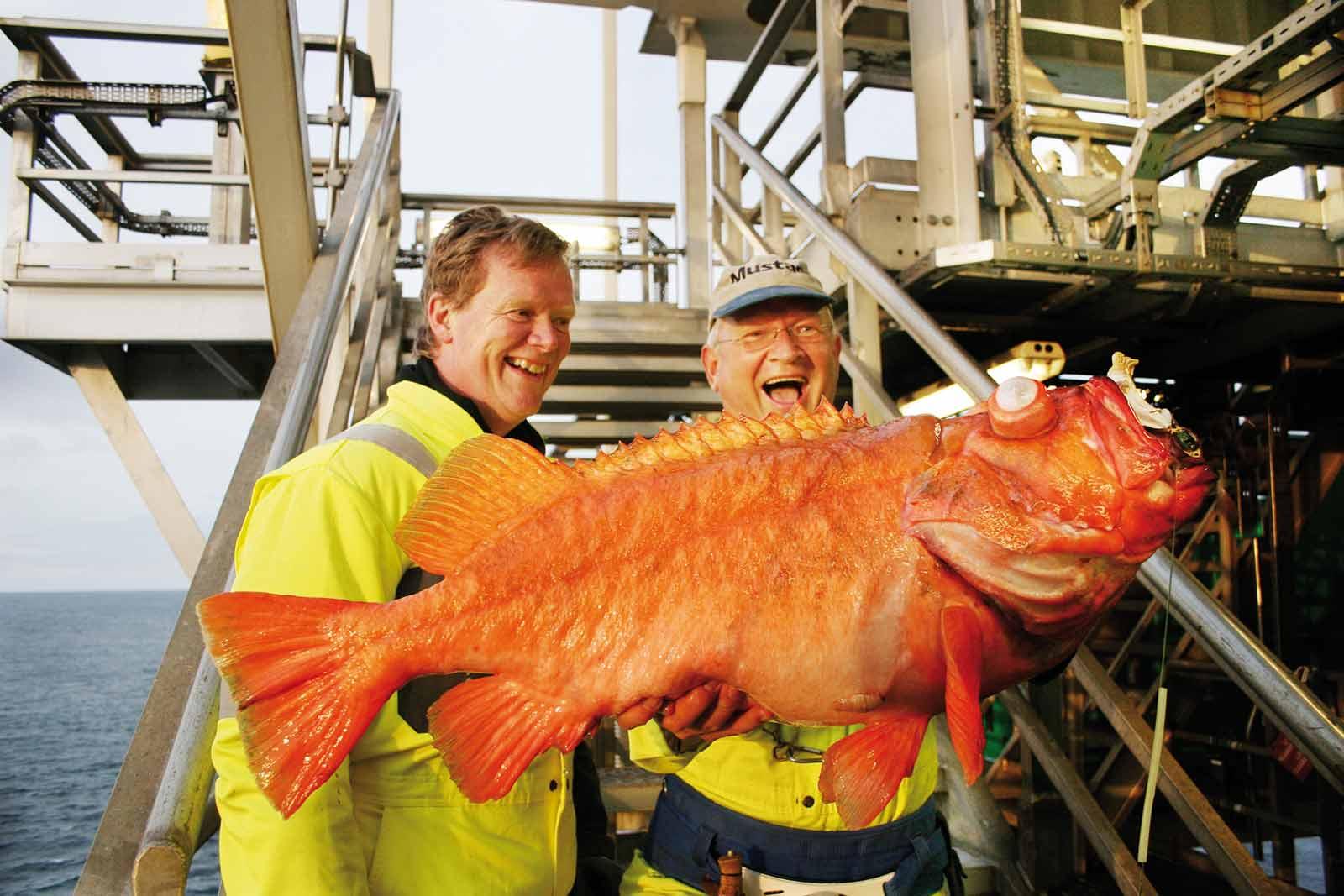 Halløj på boreplatformen - ekstreme rødfisk!