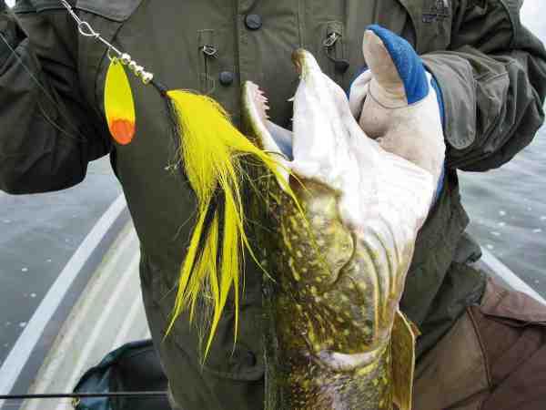 Her gør kombinationen af Bucktail og Indiana bladet, at den kan fiskes både højt og langsomt. Ydermere virker de to enkeltkroge fremragende, både mht. krogning og til at minimere bundhug/grøde.