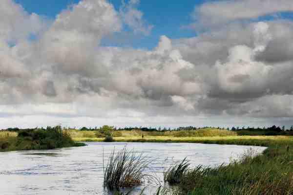 Den nederste del af Skjern Å er perfekt for laksefluefiskeren: Masser af kasteplads og god strøm.