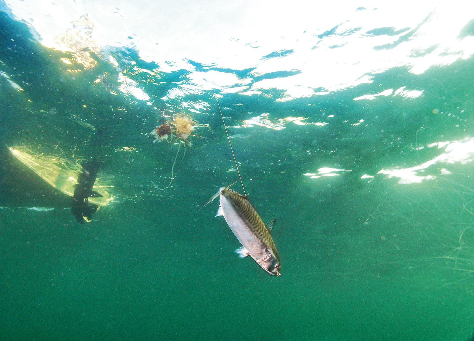 Makreljagt med fluegrejet