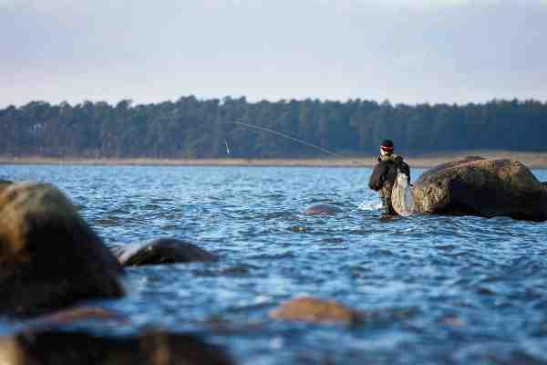 Bombardafiskeriet er et godt bud på en storfisk på fluen, når de store havørred står langt ude.