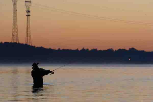 Strømmen i Lillebælt løber med stor kraft mange steder, og her kan man fange havørrederne tæt på land.