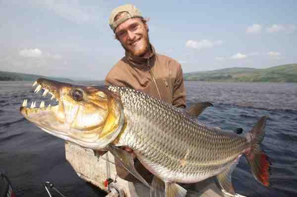 Vi har tidligere berettet om Jakub Vágners fiskeri efter Goliath Tigerfish i Congo i Fisk & Fri nr. 4/2009. Og den har noget af et frygtindgydende tandsæt.