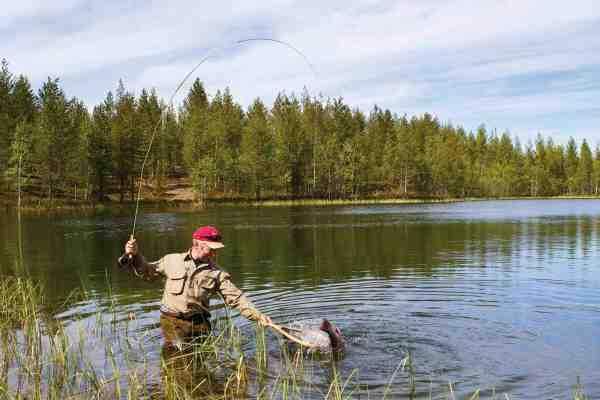 Endelige i nettet! Søerne omkring Aborrträsk byder på et eminent fluefiskeri efter fjeldørrred.