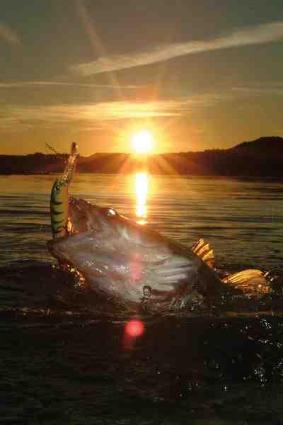 Når du fisker i sommervarmen, skal du være meget opmærksom på din indspinning, for det kan godt betale sig at have god fart på sin agn.