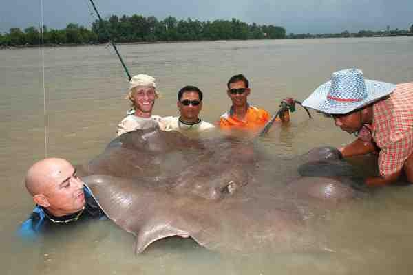 Giant Stingray – en ferskvandsrokke – fra Thailand og Mekong floden kan nå en længde på cirka fem meter og veje 600 kilo. Et sandt ferksvandsmonster. Her sætter Jakub endnu et flueben på listen – dog med et lidt mindre eksemplar af slagsen.