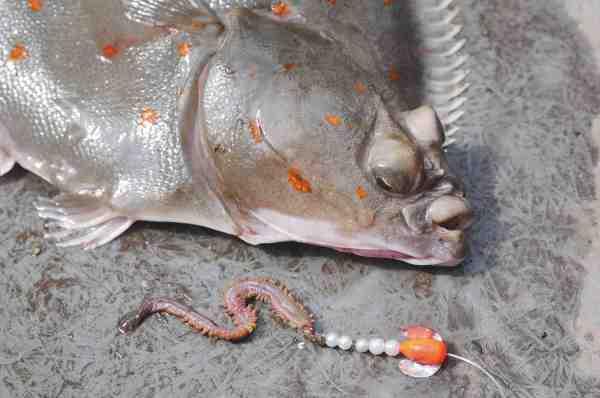Et af Rénes favorit takler til store rødspætter er børsteorm kombineret med små perler i hvid eller perlemor og evt. en lille rød og sølv spin'n'glow. Og det var netop denne kombination, fisket bag en gennemløber, som leverede varen den dag vi var med. Her er det spætten på 1,65 kilo og taklet den faldt for.