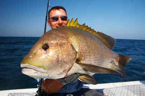 Heftige snappere huggede hårdt på jigs fisket i dybet.