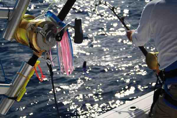 Det er tunge grejer der skal til for at hive de store marlin ind. Her er det et stort Shimano Tiagra.