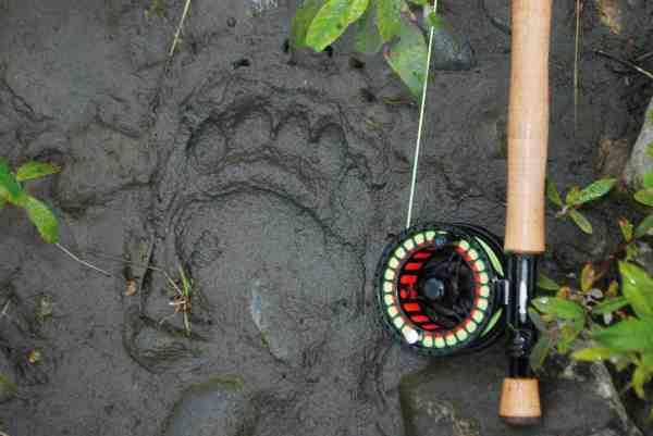 Efter to timers vandretur alene i vildmarken, hvor Søren prøver at indhente de andre, og evt. spotte deres spor i mudderet, var det eneste han så, helt friske spor af grizzly, som var på vej af samme rute. Så føler man sig meget lille og hjælpeløs, selvom man er bevæbnet med peberspray.