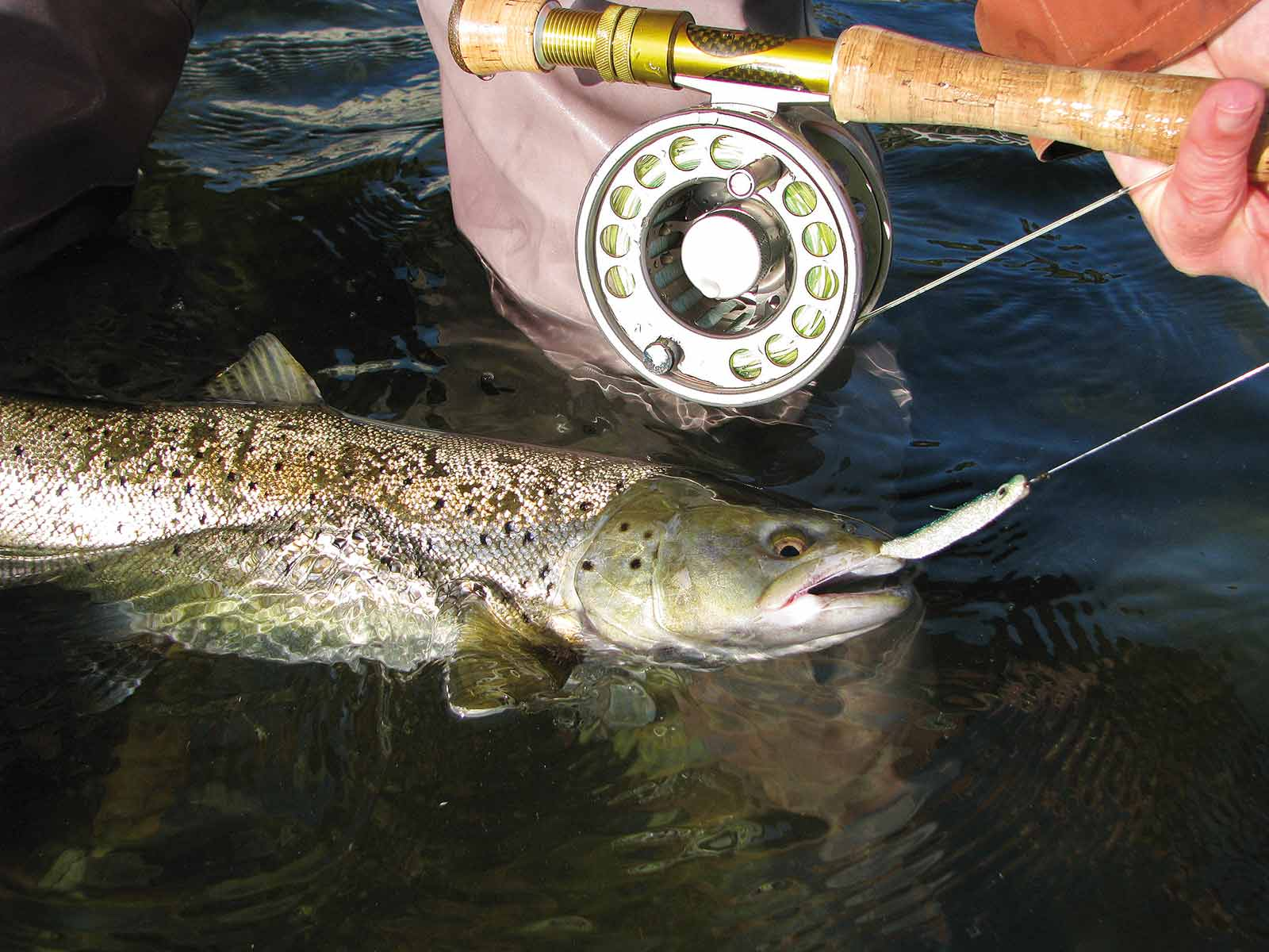 Foder fiskene med ske