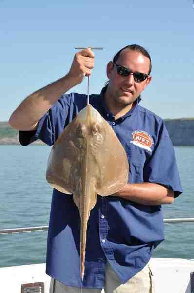 En small eyed ray er kommet op, det var en af mange nye arter som det danske team fik på dæk.