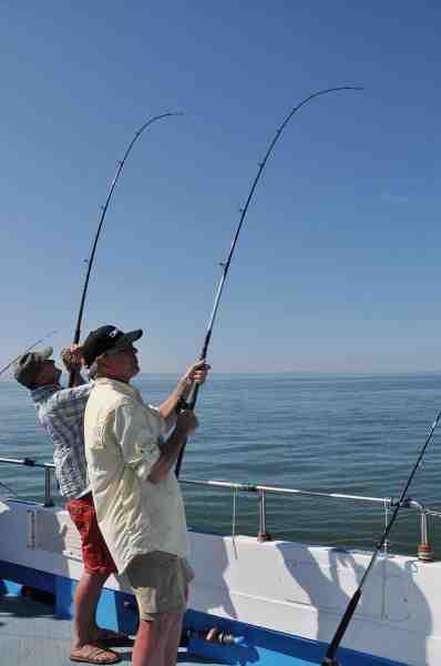 Når først fiskene var fundet var det ikke usædvanligt at to eller flere stod med bøjet stang på en gang.