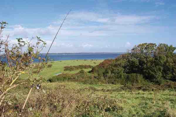 Der er en skøn udsigt over strandengen ud mod Nørrerevle med græssende kreaturer i baggrunden.