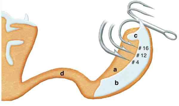 På små kroge under str.12 kan modhagen lige akkurat få fat i det bløde lag (a), hvor krogen bedst får et solidt kroghold under kæbebenskammen (c). Og på de lidt større fisk kan det hårde lag (b) også penetreres. Men – når krogen er større end str. 10-8, hvilket er tilfælde med de traditionelle og populære kystteknikker, er afstanden fra krogspids til bagsiden af modhagen så stor, at modhagen kun yderst sjældent kan få fat i (a). Og da de store kroge ikke kan penetrere den hårde del af kæben (b), betyder det at omkring halvdelen af alle kontakter mistes med traditionelle teknikker.