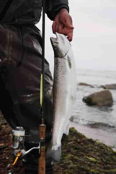 Denne smukke fisk kunne ikke stå for et hurtigtfisket blink en varm sommeraften.