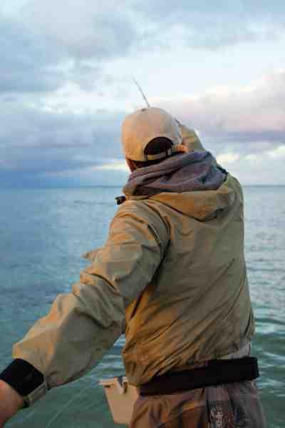 Man finder ofte havørrederne på kanten til sandet langs de sydjyske kyststræk.