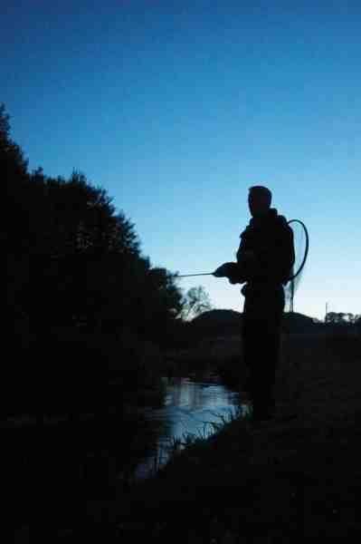 Mørket er så småt ved at lægge sig og der fiskes intenst langs den lille fynske å.