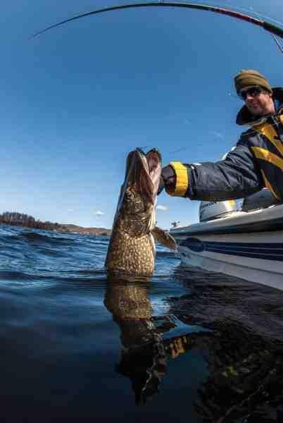 Det nemmeste og mest skånsomme over for fisken er normalt at lande den i et gællegreb.