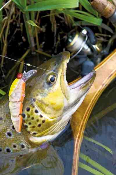 Wobleren Larvae 55 fra Savage Gear en en fantastisk wobler til grove bækørred – her fisket på et reloose-takel.