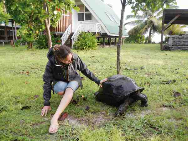 April får sig en god snak med sin nye ven – en lokal land skildpadde.