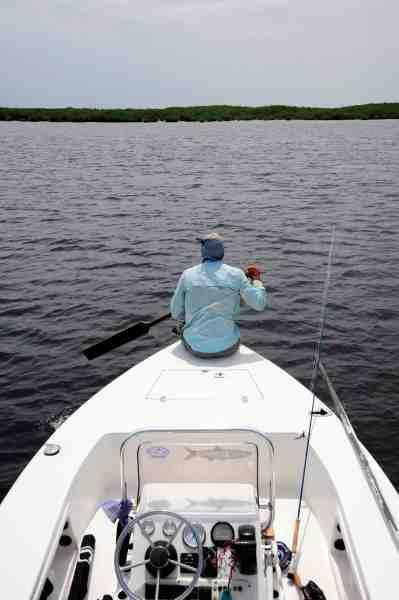 Guiden padler stille den store fladbundede båd frem. Selvom vandet er dybt, kan man ikke bruge motor til at snige sig ind på de meget sky tarpon.