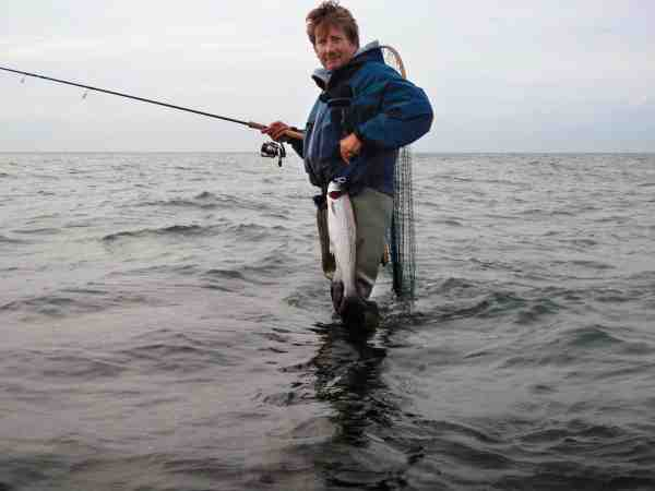 Oddens stærkt strømmende vand tiltrækker mange havørreder i deres søgen efter bytte.