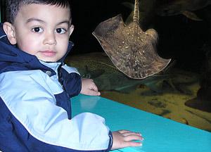 Nissejagt i Øresundsakvariet