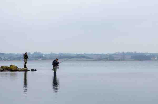 De massive udsætninger i Isefjorden er en af årsagerne til, at det tidlige forårsfiskeri ved Lammefjorden er så populært.