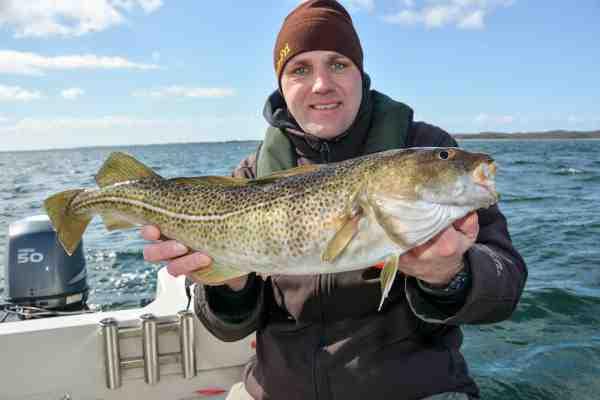 David Nielsen med en fin torsk fra Langelands Bæltet. Du kan læse meget mere om fiskeriet her i det aktuelle nummer af Fisk & Fri.
