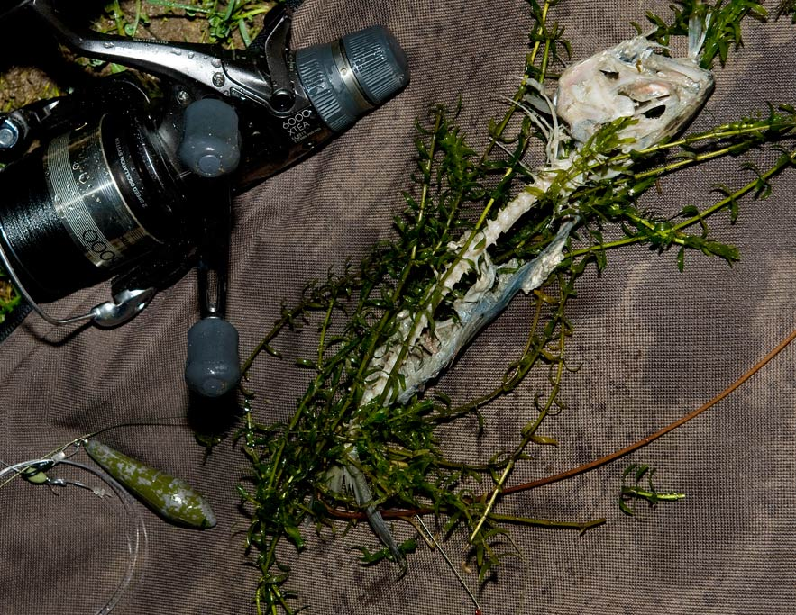 signal-crayfish-peeling-heering