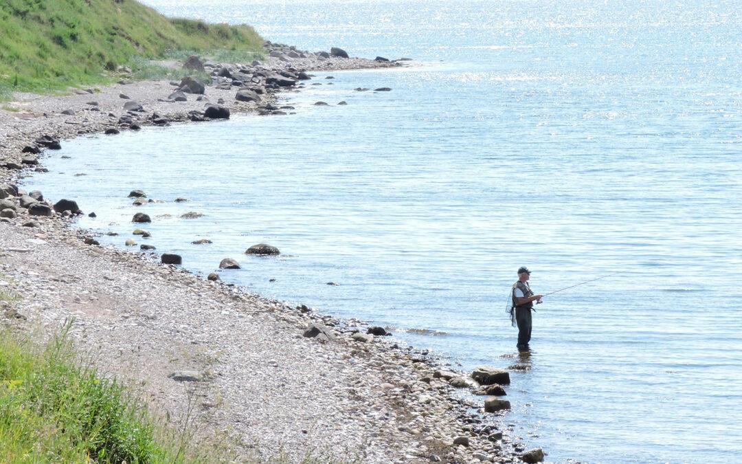 Projektleder søges til ny dansk fiskeplatform