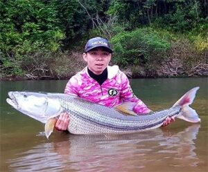 Striped Pikecarp