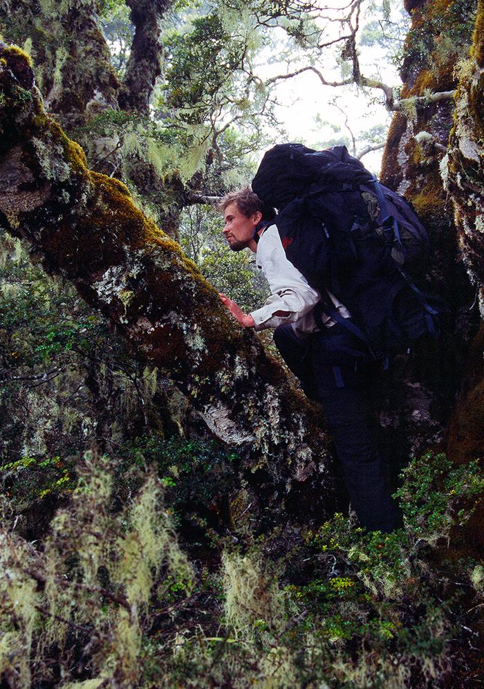 Vandring mod pladser med longfinnede eels på New Zealand