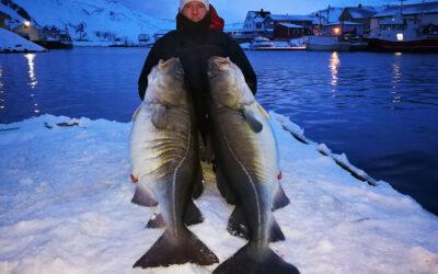 30 kilos skrei i båden