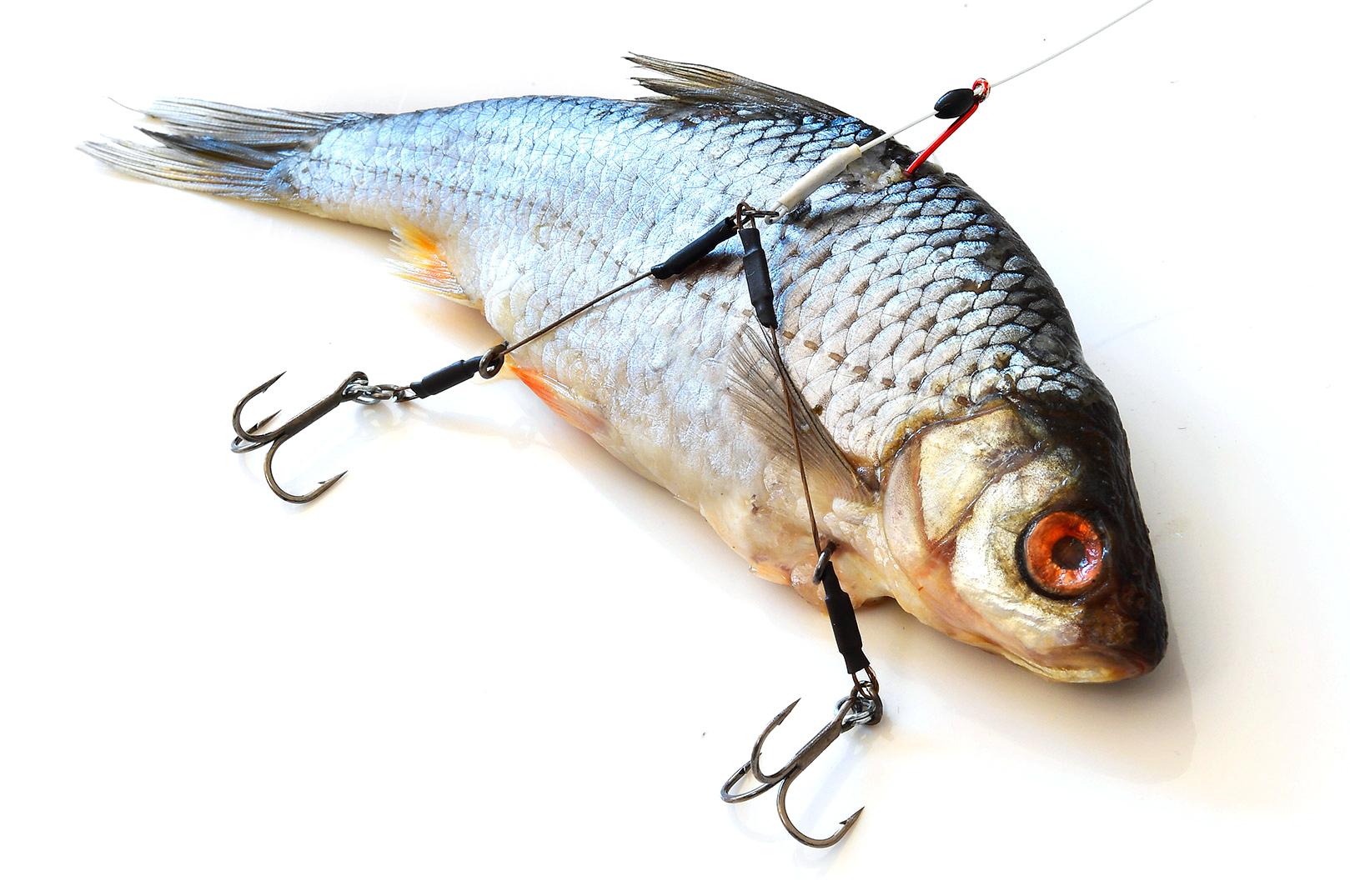 Twin Hook Link Baitfish Release Rig