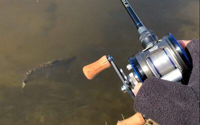Multihjul og fluorocarbonline giver fisk