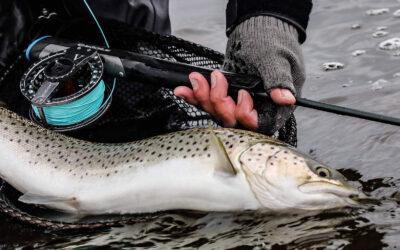 Oplev Limfjordens havørredfiskeri