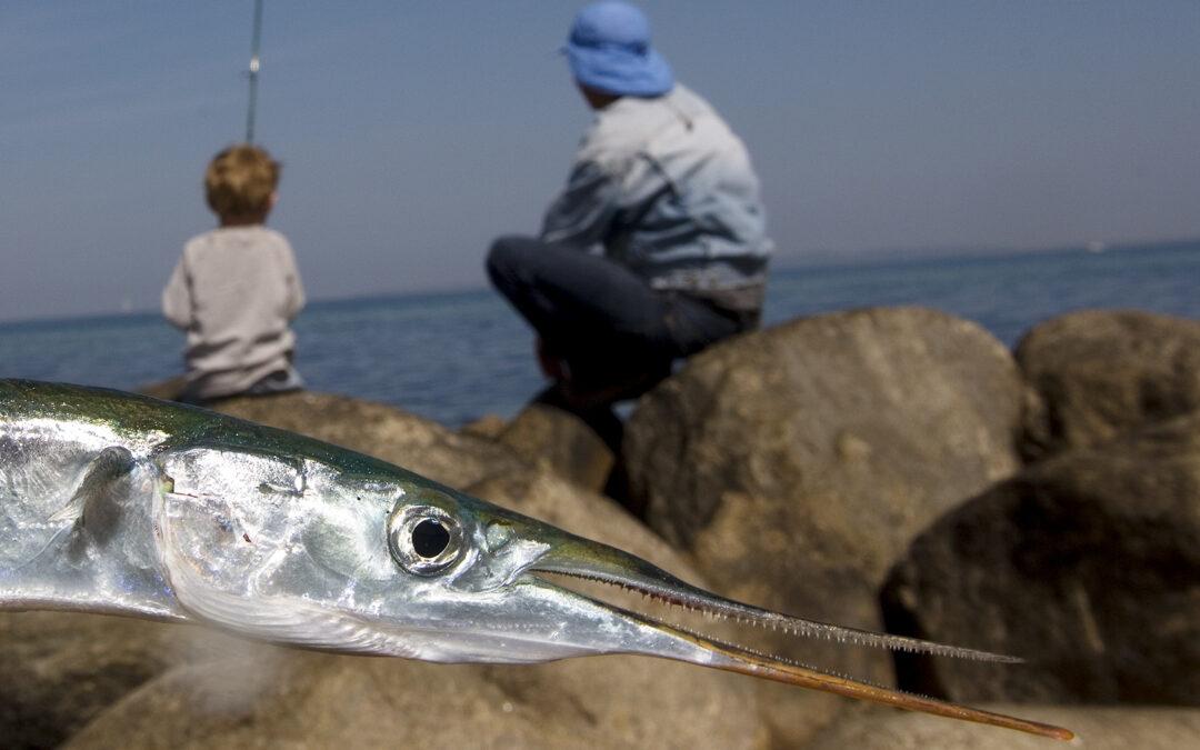 Hornfisk Kronborg 2020
