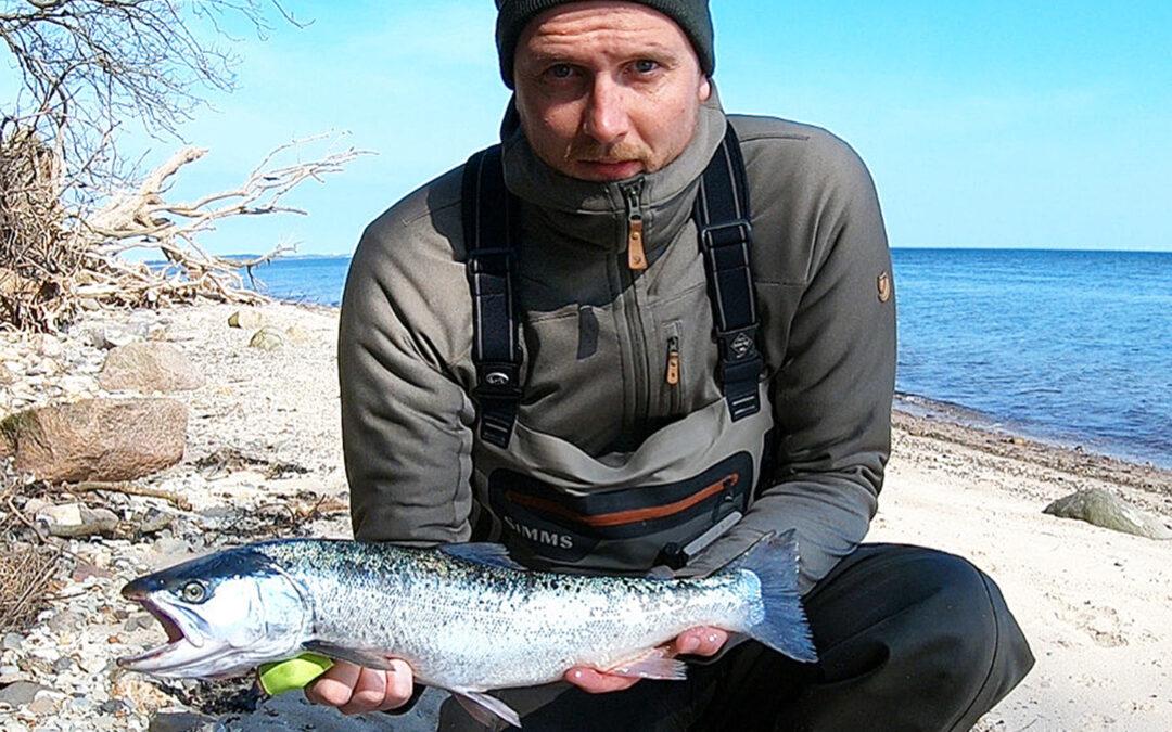 Michael Madsen med havørred fra Limfjorden