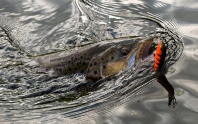 Fiskepleje på Afveje (3/3): Modstanden mod miljøet