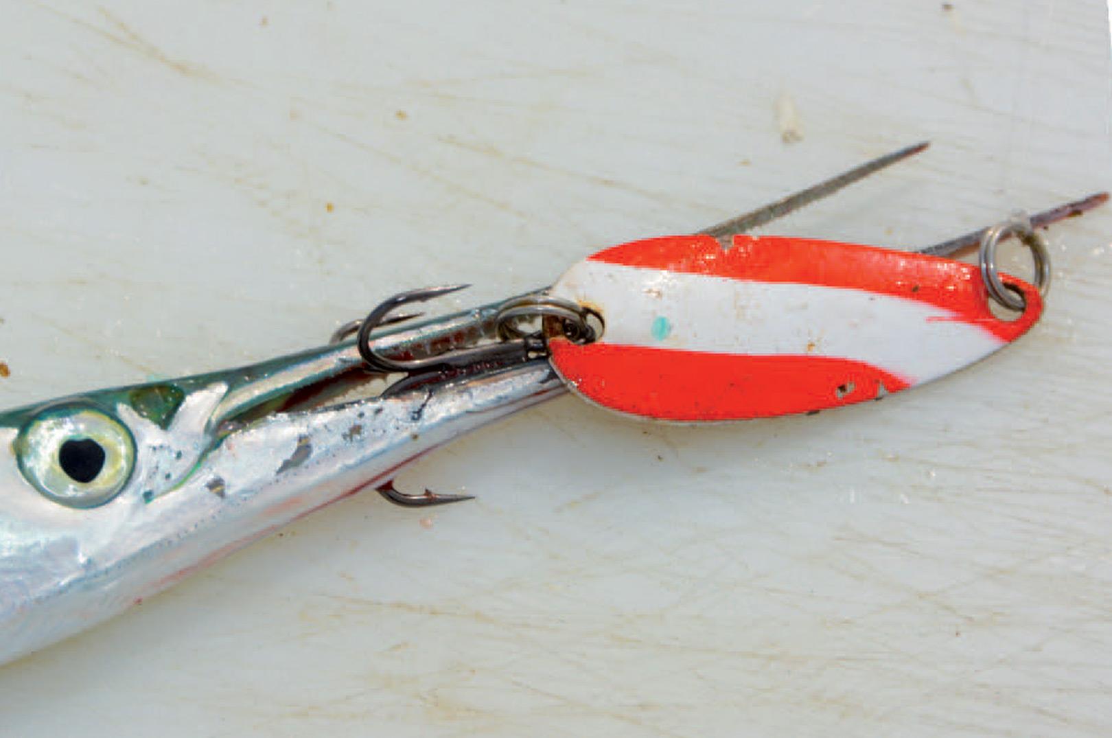 Hornfisk på blink