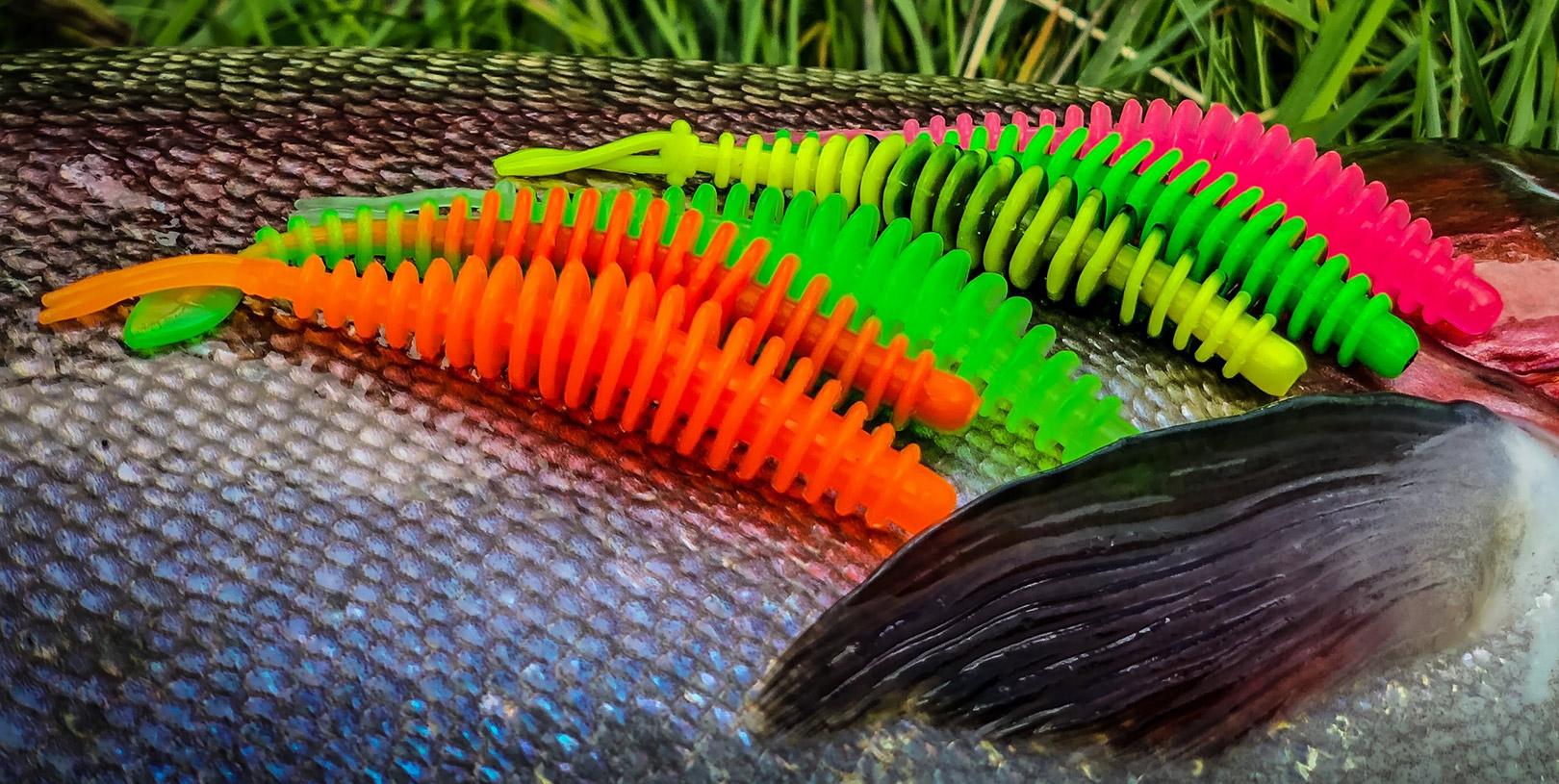 T-Worms fået i et bredt udvalg af farver, to forskellige dufte, og tre forskellige typer hale.