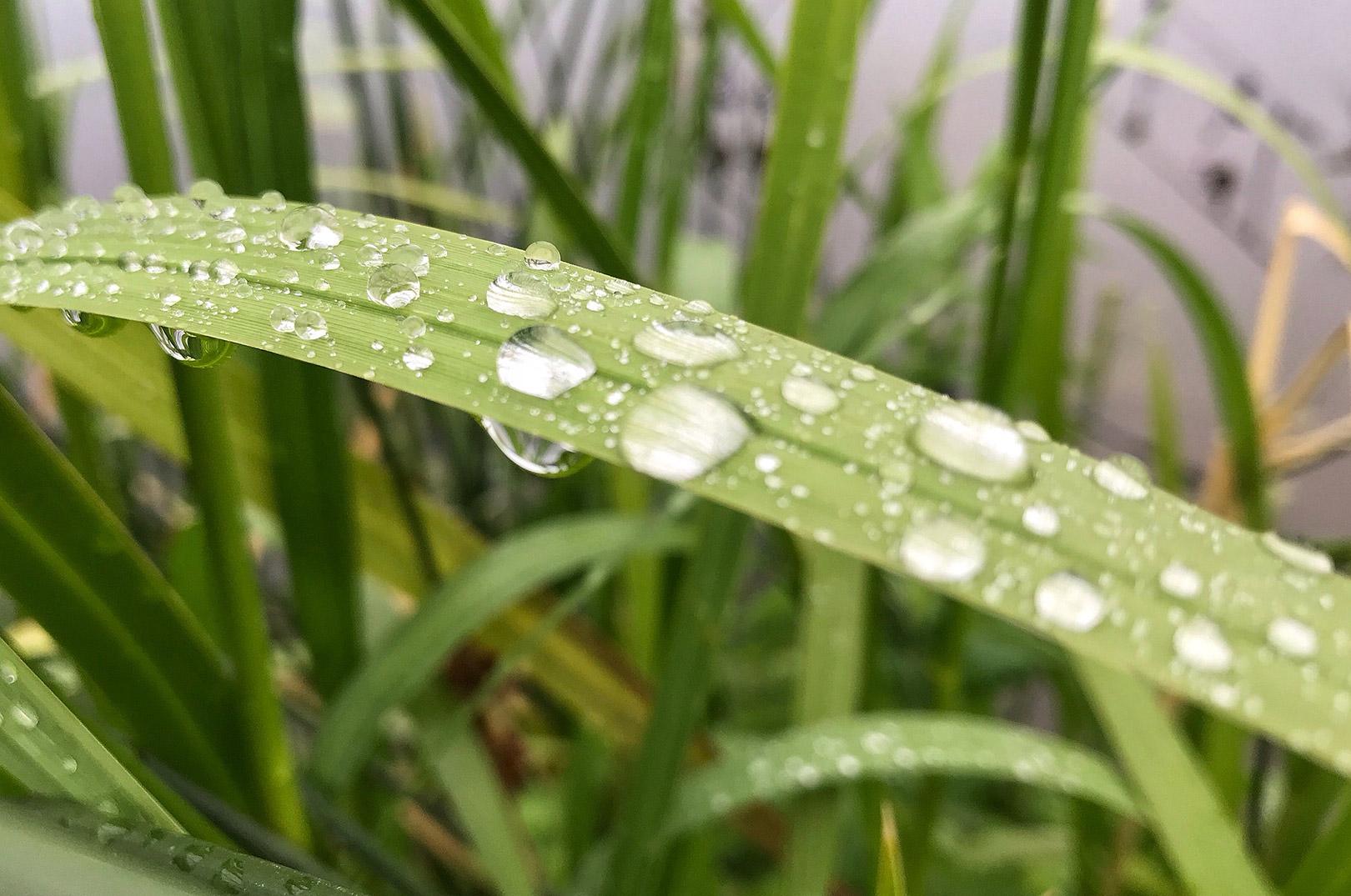 Regndråber