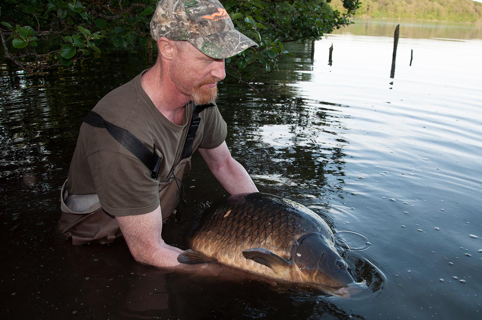 Søren Beck i fuld færd med at genudsætte den enorme skælkarpe på 20,2 kilo