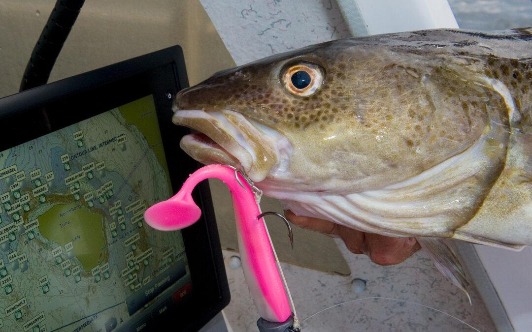 Stenrevene har stor betydning for den marine fauna - blandt andet torsk