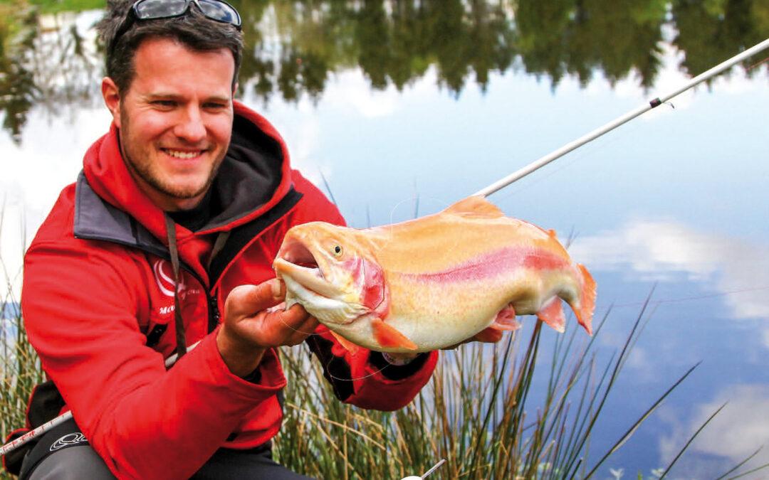 Marc Bauer med en fin guldørred taget på Surface Rattle og Magic Trout B-maggot.