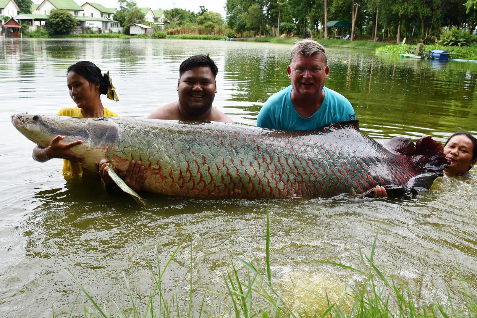 Denne arapaima til Poul Berthelsen blev estimeret til cirka 225 kilo.