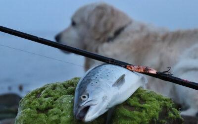 På tur med den firbenede fiskemakker